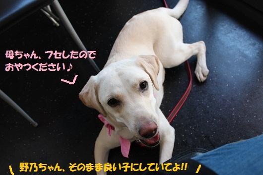 IMG_4383編