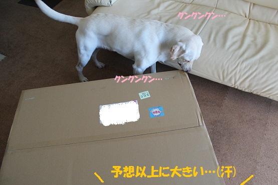 IMG_8643編集