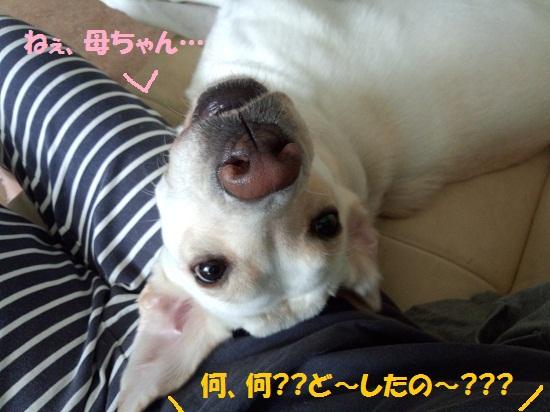DSC_0060-1.jpg
