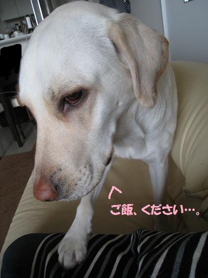 IMG_6094.jpg