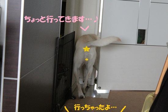 IMG_8450-1.jpg