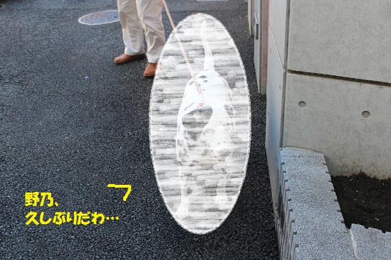 IMG_9071-1.jpg