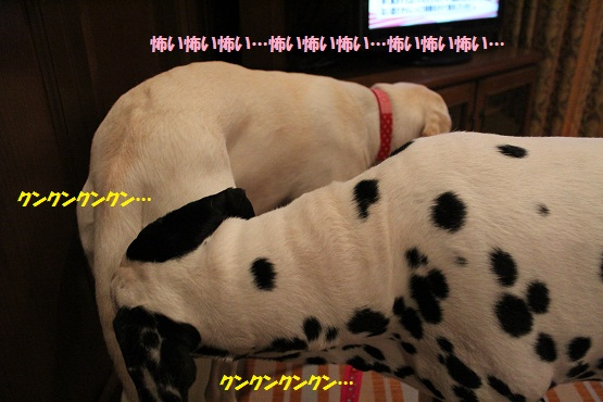 IMG_9160-1.jpg