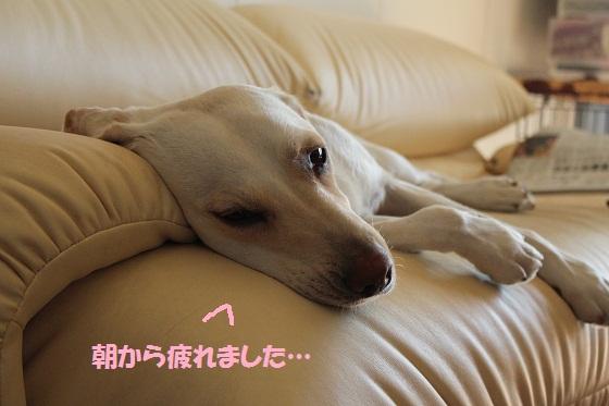 IMG_9508-1.jpg
