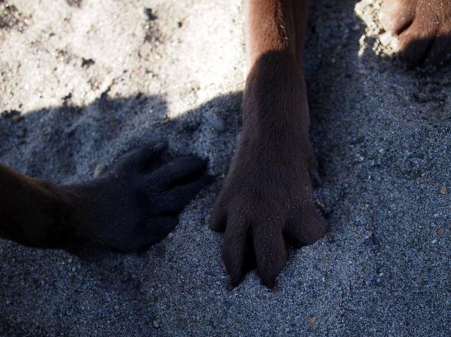 ラブとモカの手