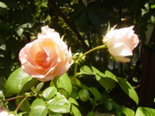 flower+s+008_convert_20100530164314.jpg