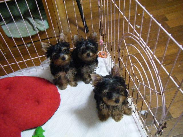 Epi's babies