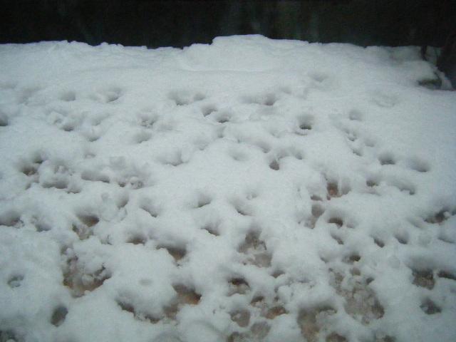 雪の日 29 Feb 12