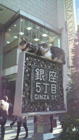 五丁目の猫