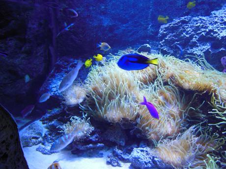 綺麗な魚たち