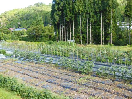 野菜採り放題