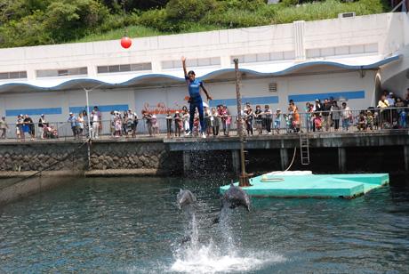 イルカとジャンプ
