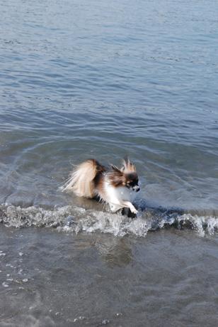 海サイコー