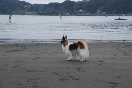 お気に入りの砂浜で