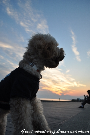ラウナと夕日