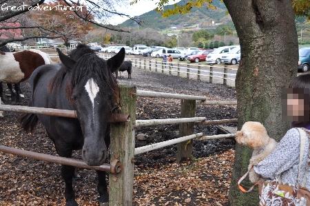 ラウナと馬