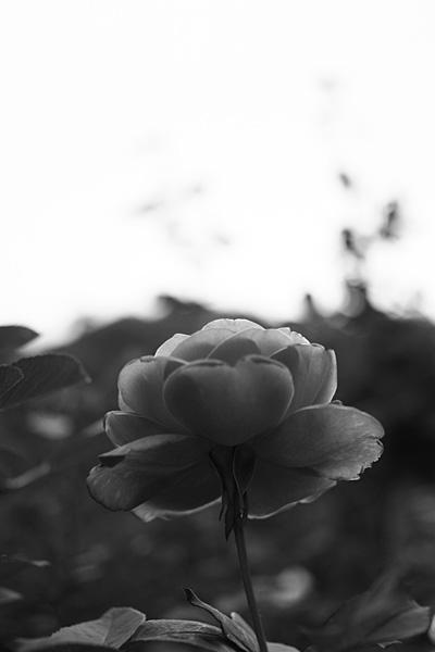 photo135.jpg