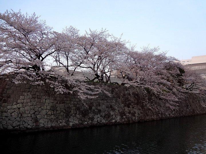 20120405-5.jpg