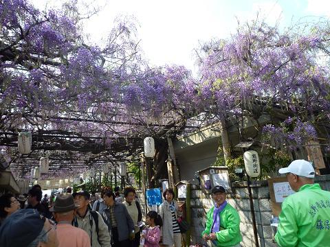 信達宿藤祭