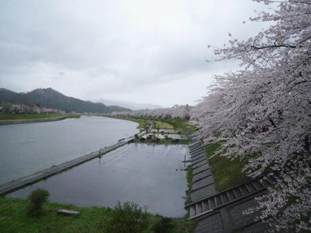 桧木内川堤02