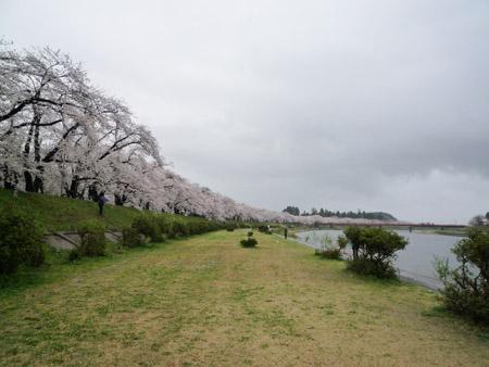 桧木内川堤03