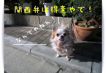 20101130091607109.jpg