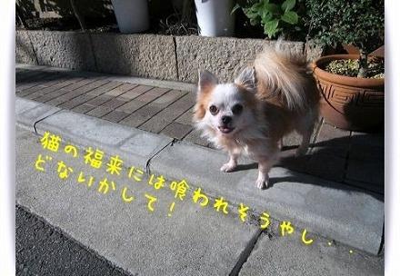 20101130091608b68.jpg