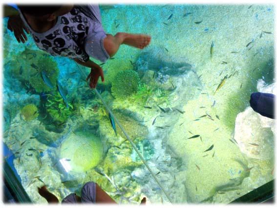 サンゴの海水槽0729