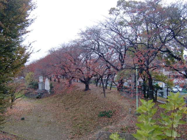 20111201z36.jpg