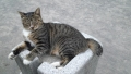 20121012_cat 1_convert