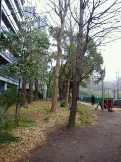 NEC_3030.jpg