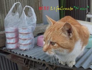 ハタトラくん専用ネコ缶がいっぱい♡