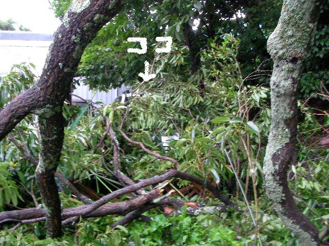 倒木被害⑪-1