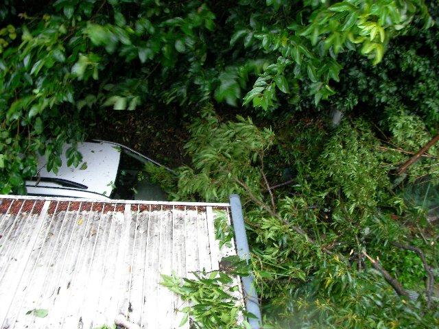 倒木被害⑨