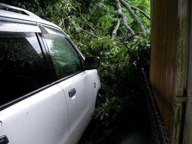倒木被害⑥