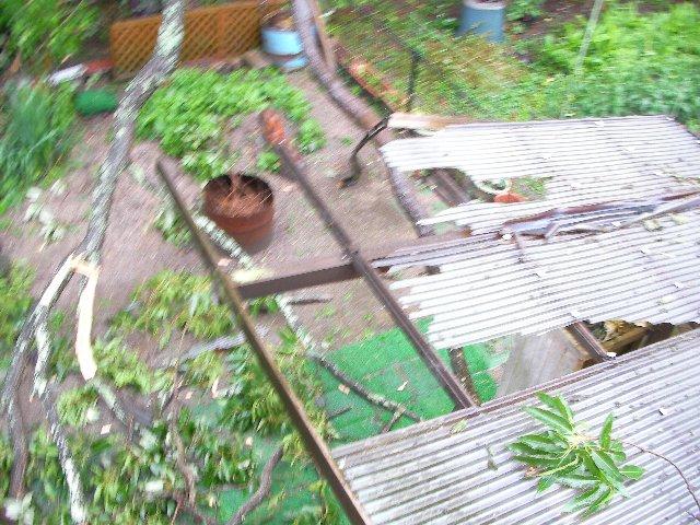 裏の屋根被害④