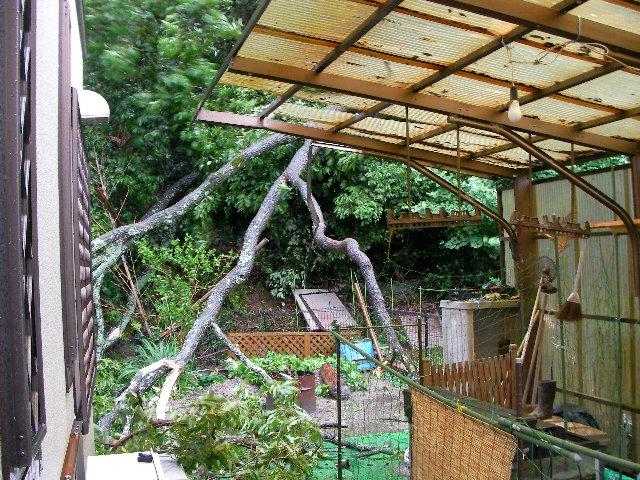 裏の屋根被害③