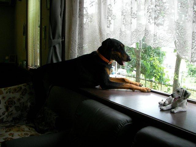 出窓から④