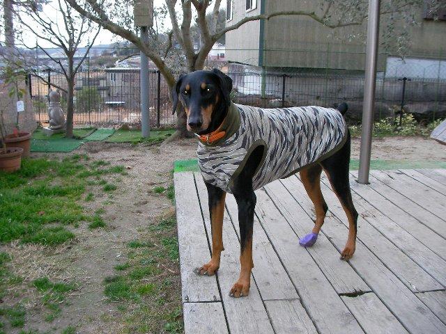 迷彩犬服モデル