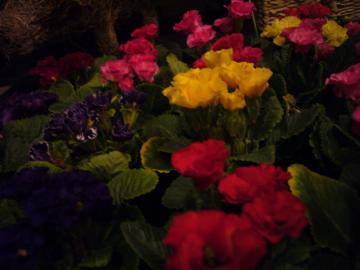 2011_0204_184657-P1050369_convert_20110204185757.jpg