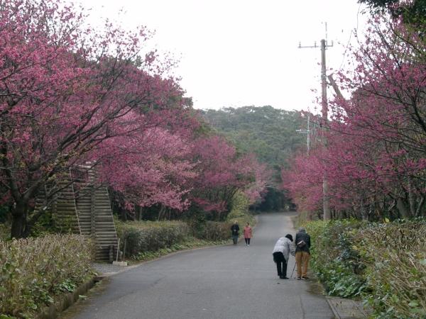 奄美自然観察の森 025
