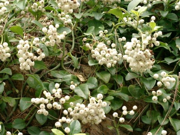 ?植物 058