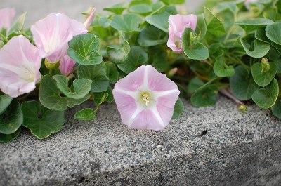 堤防の植物1