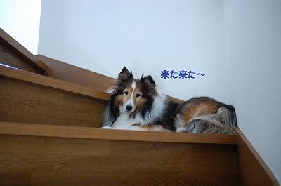 階段で22
