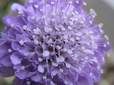 リズパパのお花