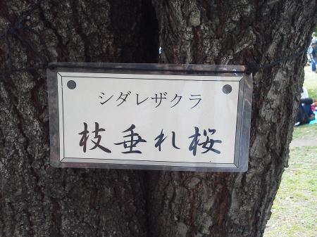 山王公園4
