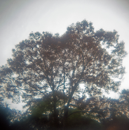 rere逆光の木305