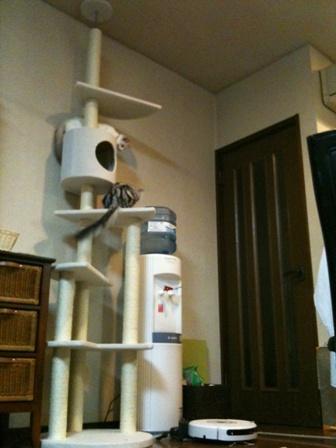 rinas camera 055