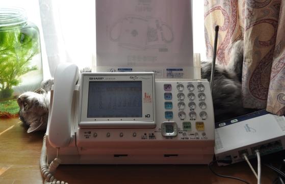 rinas camera 080