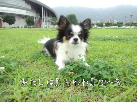 RO9lIsHI.jpg